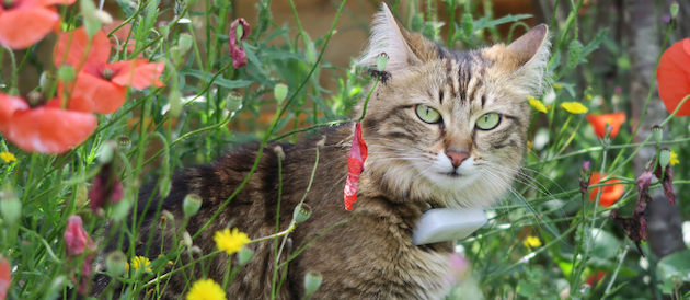 collier gps pour chat weenect